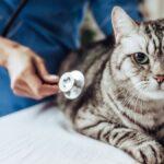 imagenes dia del veterinario 2021